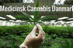 LED plantelys til Medicinsk Cannabis Danmark